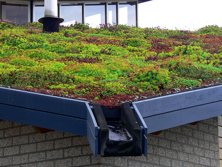 Living Roofs Green Roofs Living Wall Specialists
